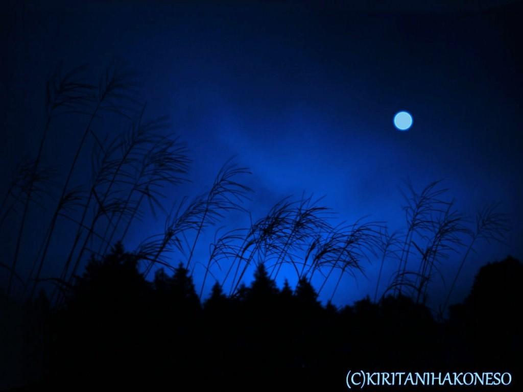 月光に荒海となる芒原